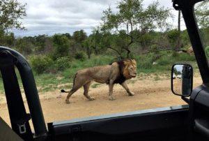 Kruger tour